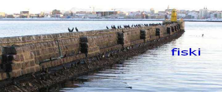 fiski - Hausmynd